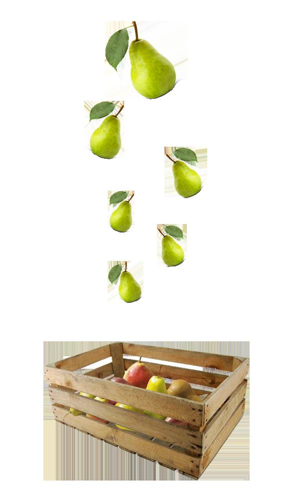 perenbomen