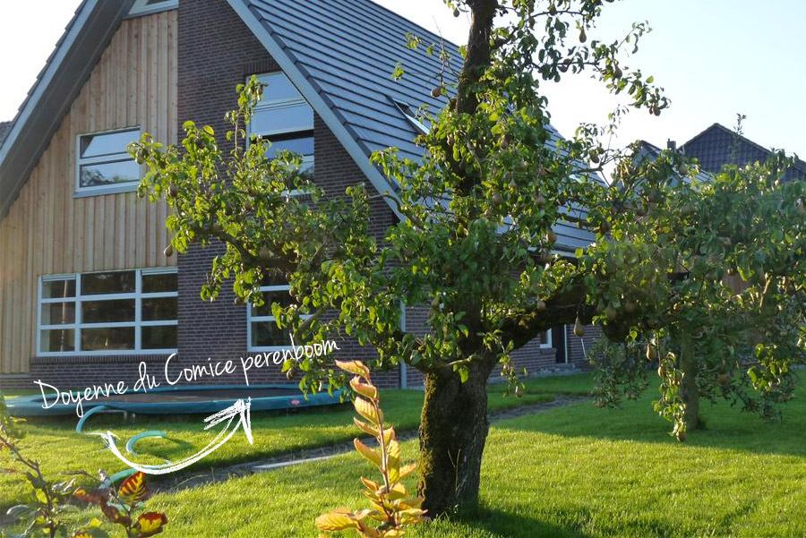 Voorkeur Oude Fruitbomen Kopen? OudeFruitbomen.nl is dé Specialist #XK87