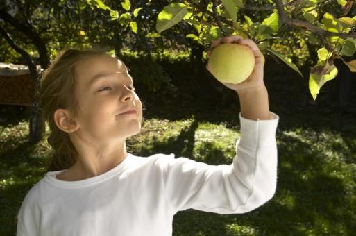 Meisje plukt een rijpe vrucht