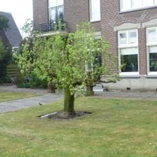 Fruitboom met succes geplaatst