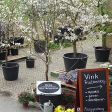 2014-04-07 11.09.50 verschillende kersen in bloei voor de winkel.